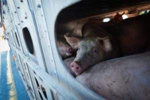 Jo-Anne McArthur / We Animals