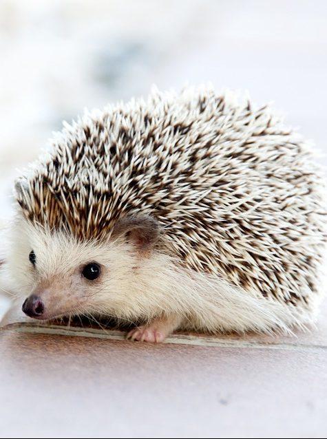 Maltraitance animale animaux sauvages