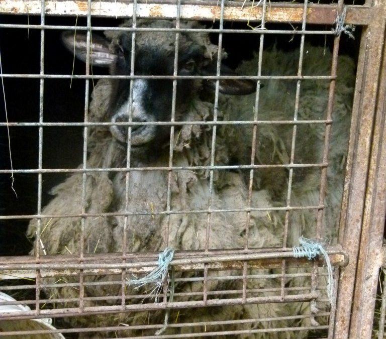 Proposition de loi n° 286 visant à aggraver les sanctions pénales en cas d'abandon, de sévices graves et d'actes de cruauté envers les animaux
